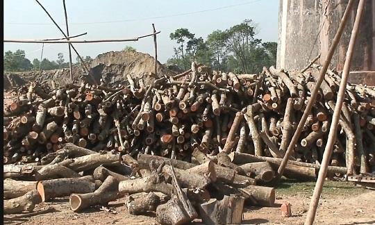 টাঙ্গাইলের ভূঞাপুরে ইটভাটা গুলোতে অবৈধভাবে পোড়ানো হচ্ছে নিষিদ্ধ কাঠ
